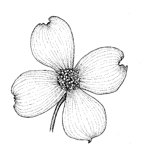 Multiple Flower Drawings Together Into a Multiple