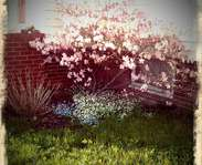 Sighting photo: Rhododendron vaseyi