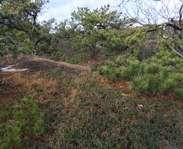 Sighting photo: Arctostaphylos uva-ursi