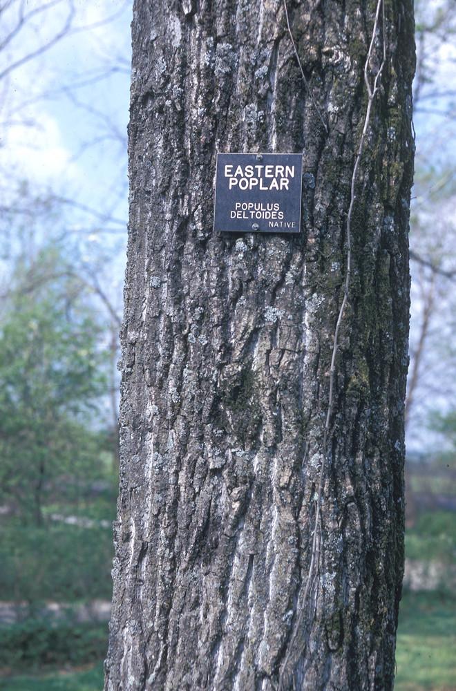 Cottonwood native dating