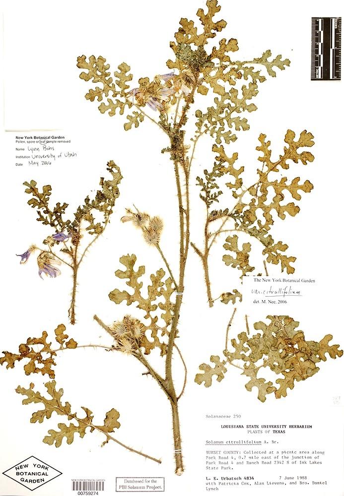New York Botanical Garden Virtual Herbarium Garden Ftempo