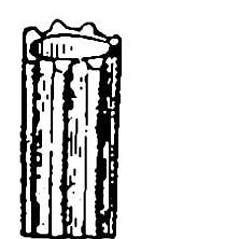 Stems: Eriocaulon aquaticum. ~ By N.L. Britton and A. Brown - Public domain. ~  Public Domain. ~ None needed ~ USDA-NRCS Plants Database - plants.usda.gov/java/