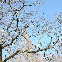 Plant form: Quercus prinoides. ~ By Arieh Tal. ~ Copyright © 2018 Arieh Tal. ~ http://botphoto.com/ ~ Arieh Tal - botphoto.com