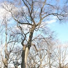 Plant form: Ulmus pumila. ~ By Arieh Tal. ~ Copyright © 2020 Arieh Tal. ~ http://botphoto.com/ ~ Arieh Tal - botphoto.com