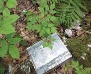 Sighting photo: Actaea rubra