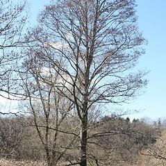 Plant form: Alnus glutinosa. ~ By Arieh Tal. ~ Copyright © 2020 Arieh Tal. ~ www.nttlphoto.com ~ Arieh Tal - www.nttlphoto.com
