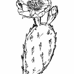 Flowers: Opuntia humifusa. ~ By Gordon Morrison. ~ Copyright © 2020 New England Wild Flower Society. ~ Image Request, images[at]newenglandwild.org