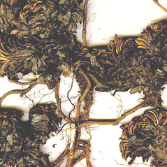 Bark: Diapensia lapponica. ~ By CONN Herbarium. ~ Copyright © 2020 CONN Herbarium. ~ Requests for image use not currently accepted by copyright holder ~ U. of Connecticut Herbarium - bgbaseserver.eeb.uconn.edu/