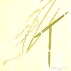 Plant form: Glyceria septentrionalis. ~ By William and Linda Steere and the C.V. Starr Virtual Herbarium. ~ Copyright © 2020 William and Linda Steere and the C.V. Starr Virtual Herbarium. ~ Barbara Thiers, Director; bthiers[at]nybg.org ~ C.V. Starr Herbarium - NY Botanical Gardens