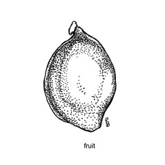 Flowers and fruits: Potamogeton ogdenii. ~ By C. Barre Hellquist. ~ Copyright © 2019 C. Barre Hellquist. ~ C.Barre.Hellquist[at]mcla.edu ~ U. of New Hampshire