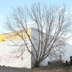 Plant form: Acer negundo. ~ By Arieh Tal. ~ Copyright © 2019 Arieh Tal. ~ www.nttlphoto.com ~ Arieh Tal - www.nttlphoto.com